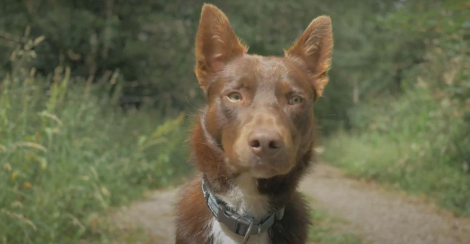 Ern, makadamkarski pes